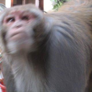 nepal2010-09