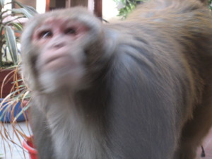nepal2010-09.jpg
