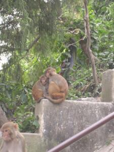 nepal2010-16.jpg