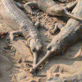 nepal2010-22