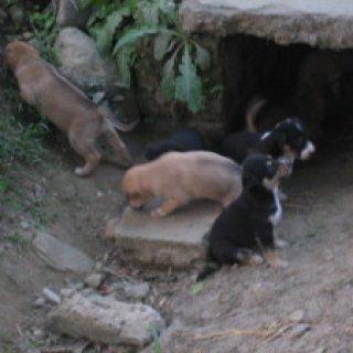 nepal2010-25