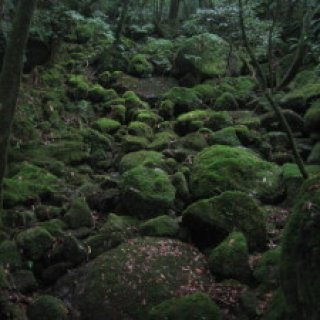 yakushima2016-21
