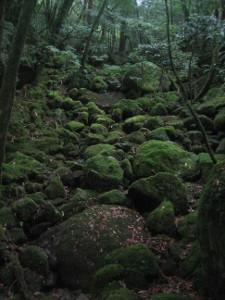 yakushima2016-21.JPG.jpg