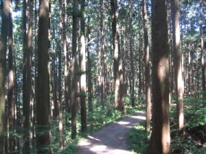 hitake-hinode-hiking-02.JPG