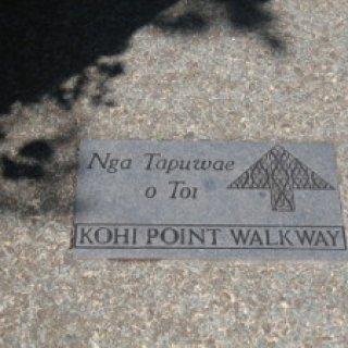 Kohi-point-05