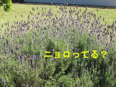019-blog.jpg