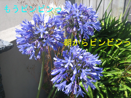 022blog.jpg