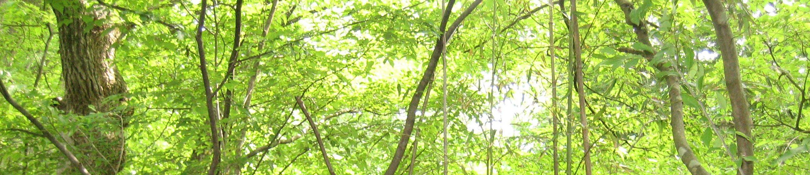 山のふるさと村 banner image