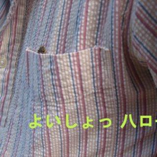010-blog