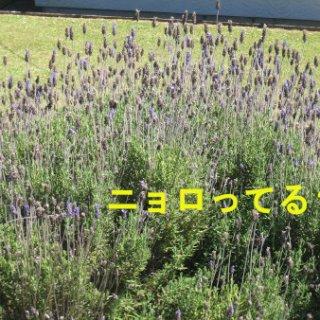 019-blog