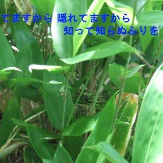 026-blog
